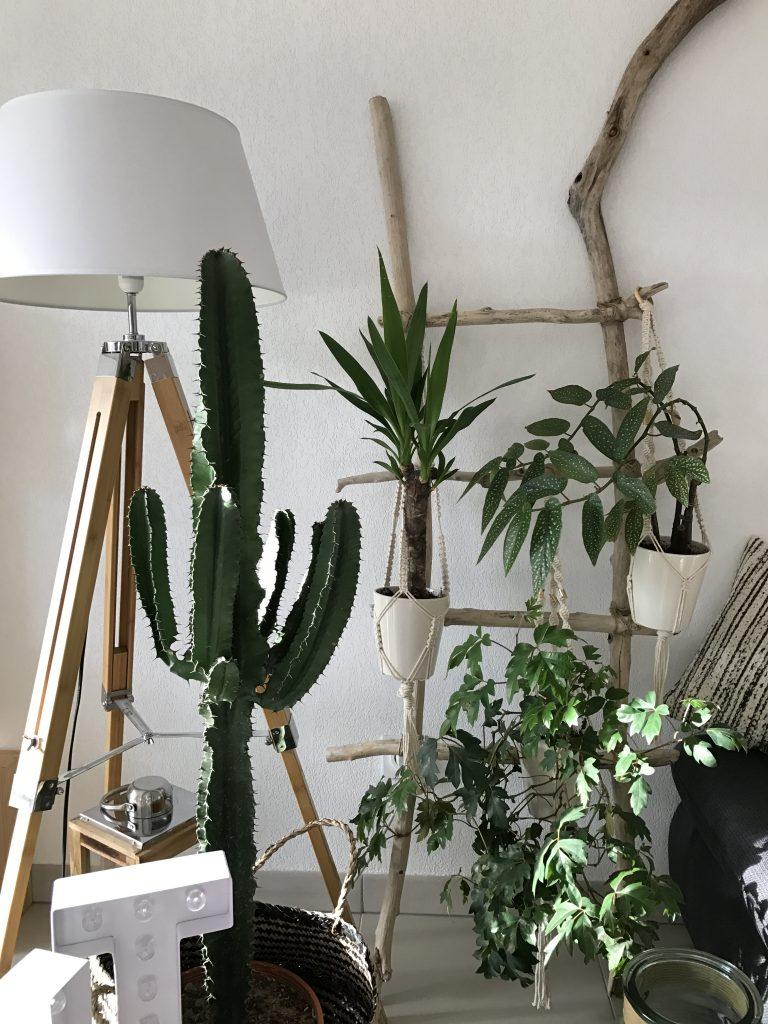 cactus salon