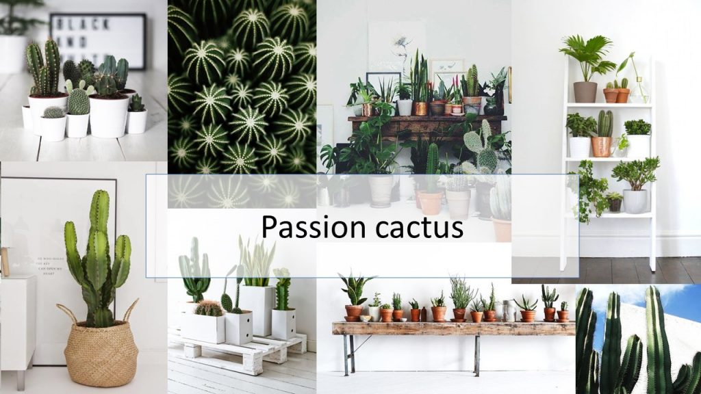 passioncactus